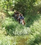 Horseback Riding Safaris - Horseback Riding Holidays in Gauteng - Johannesburg, South Africa!