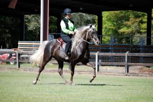 pasture and outside riding arena