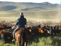 Magical Estancia in the Argentine Patagonia offers Horse Trips in High Andes and Gaucho cattle fun
