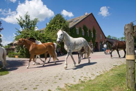 empresa de temporada vacacional, pensión de caballeriza / pensión de caballos, finca de payés, finca de equitación, finca de ponis, pensión para jinetes en Hooksiel - Wangerland