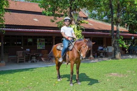 Happy Ranch Horse Farm in Siem Reap / All Regions