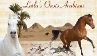 Riding holiday in Egypt - Desert rides at Laila Oasis Arabians!