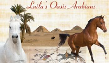 Laila Oasis Arabians in Cairo / further Regions