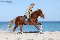 Paseos a caballo y relajarse en la playa en Túnez: Rancho Zitouna holandés, árabe noble / bereber.