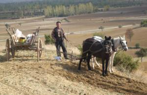 a Farmer workingthe fields in West Anatolia