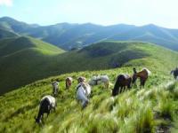 Dos Lunas - Vacaciones a caballo en Alto Ongamira - Córdoba , Argentina !