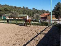 Horseback Riding Holidays for everyone at the Riding club of Rhodes 'kadmos', Rhodes, Greece!