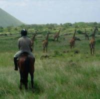 Inside Africa Budget Safaris offers of holidays including horse riding, trekking, wildlife safaris