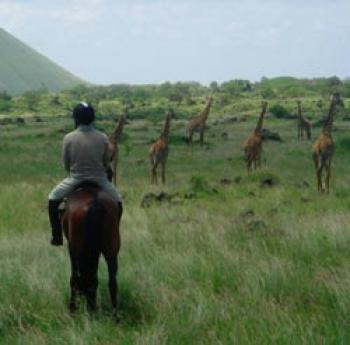 Inside Africa Safaris in Nairobi / All Regions