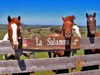 Ecofriendly Ranch-Riding Vacations in Uruguay - rural tasks, flora, fauna & historical trails!