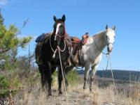 Your Western-Style Riding Holidays in British Columbia!