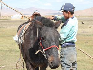 young mongolian horse man, Arkhangai province