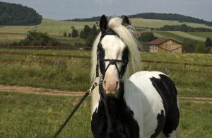 Montar en nuestro caballos de raza Tinker