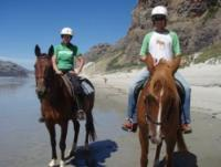 Horseback Riding Holidays for everyone at the Riding Stable in Dunedin in New Zealand!