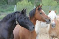 Private Stable - Riding Vacacion Costa Blanca
