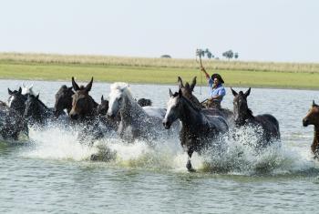 Gaucho-Argentino in Esquina, Corrientes province / All Regions