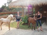 Bali Horse Adventure - Horse riding in Bali Indonesien - dreambeach Uluwatu