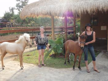 Bali Horse Adventure  in near Uluwatu Temple / Bali