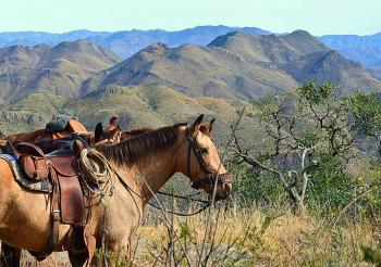 Dude/Guest Ranch, Working Ranch, Ranch Resort, Cattle Ranch, B & B for Horsemen in Sonora