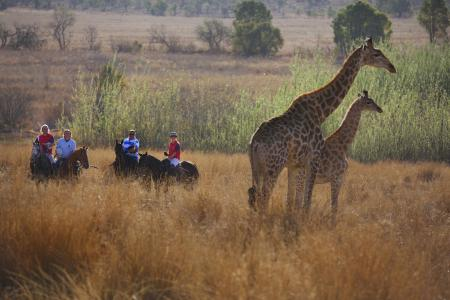 Horseback Africa in Pretoria, Cullinan / Gauteng-Johannesburg