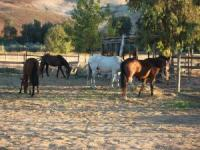 Explore beautiful northern New Mexico on horseback and stay at our comfortable guesthome