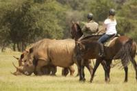Horseback Safari Lodge in the Waterberg, South Africa, for all levels of rider.