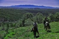 Horse trail riding - Trekking in Portugal. Explore the hidden beautys of the Algarve on horseback!