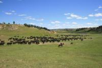 Kara Creek Ranch: real Working Cattle Ranch in Sundance, Wyoming, USA
