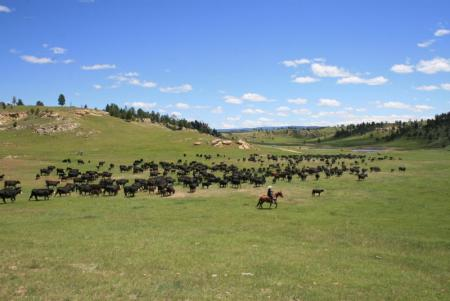 Holiday Company, Dude/Guest Ranch, Working Ranch, Cattle Ranch in Sundance