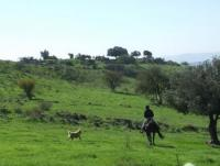 Tour Israel-Sirin Rider -All-inclusive trail riding vacations in Israel! Horseback Riding in Israel!