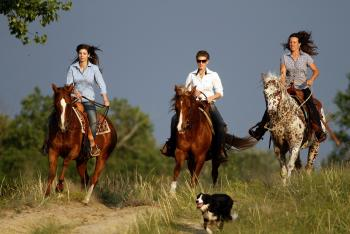 Holiday Company, B & B for Horses, Breeding Company, Training Company, Dude/Guest Ranch, Working Ranch, Ranch Resort, Ranch with Winter Snow Activities, Farm, Riding Stable, Western Riding Stable, Children's Holiday Company, Hotel for Horsemen in Izsak