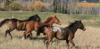 Wide variety of horseback adventures for everyone in Smither, British Columbia, Canada