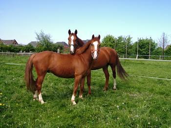 Holiday Company, B & B for Horses, Farm, Riding Stable, Pony Stable, B & B for Horsemen in Hooksiel - Wangerland