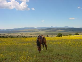 N Bar Ranch in Grass Range / Reserve (40 miles) / New Mexico