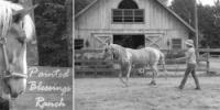 Painted Blessing Ranch-Natural horsemanship for a better understanding of the horse in New Hampshire