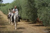 Riding holidays for everyone at the Ranch Moncerlongo in Rovinj ( Istria ) Croatia.Trekkings 3-5days