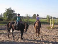 Pferdepension im Zucht und Ausbildungsstall  in netter Stallgemeinschaft
