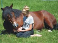 Pensionsstall und Reitbetrieb mit den Ponys der Ponyfarm