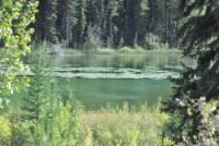 Holidays for riders and non-riders at beautiful Ruth Lake near 100 Mile House, riding & relaxing!