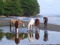Horseback Riding on Brigitte´s Horse Ranch on the Caribbean coast of Costa Rica