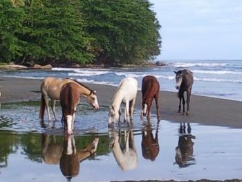 Brigittes Ranch in Cahuita, Talamanca, Limon / All Regions