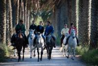 Henrique Abecasis Stud - Equestrian Tourism in the Heart of Portugal near by Lisbon & Costa Vicenta