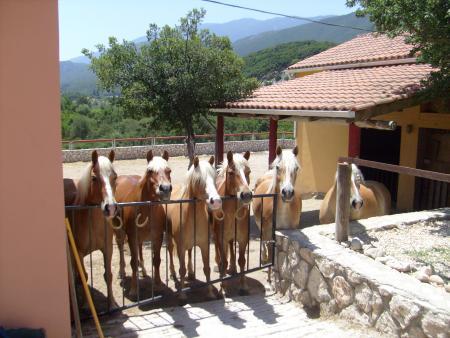 Bavarian Ridingstable in Sami/ Koulourata, island Kephalonia / Ionian Islands