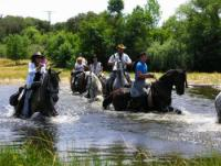 Horses to enjoy in Spain. Gredos Mountain and Camino de Santiago
