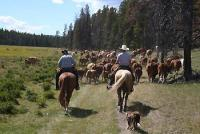 Adventure trails on good horses in Canada