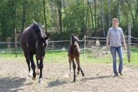 Horseback Riding Vacations in Staufenberg, Hesse, between Giessen and Marburg, Germany!