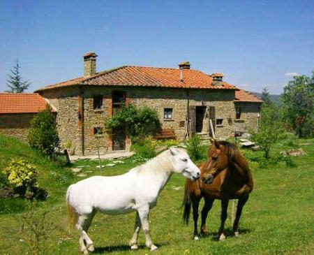Holiday Company, Horse Trekking Station, Dude/Guest Ranch, Farm, Riding Stable, B & B for Horsemen, Western Riding Stable, Hotel for Horsemen in Molin Nuovo / Arezzo