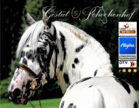 Pferdezucht- und Pensionsbetrieb, Pferde-REHA * Gestüt Schochenhof im Allgäu, Deutschland