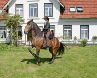 Horseback Riding Holidays in Oersberg, Schleswig-Holstein, classisal dressage + natural horsemanship