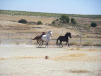 Diferent holidays for rider and such who wants to be - at a spanish farm in the south of Spain